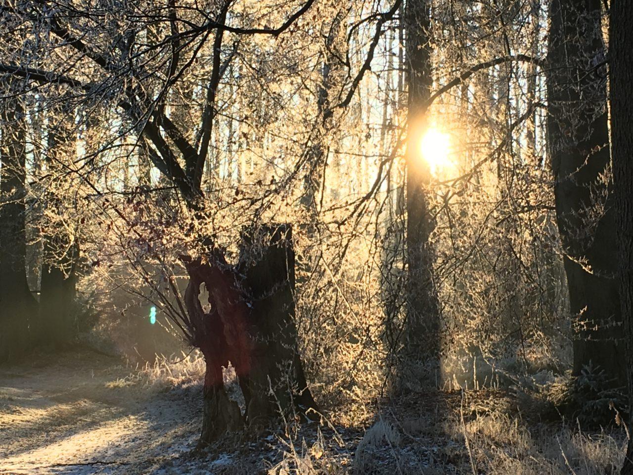 Wintersonne     Foto: Ulrike Zielke